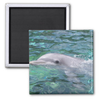 Swimming Dolphin Magnet