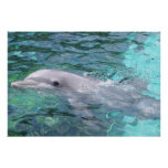 Swimming Dolphin Poster