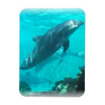 Swimming Dolphin Premium Magnet Magnets