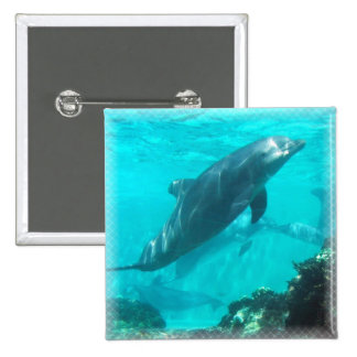 Swimming Dolphin Square Pin