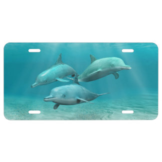 Swimming Dolphins License Plate