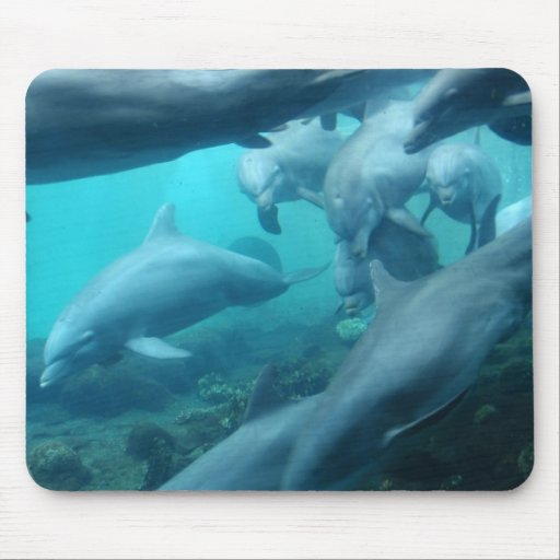 Swimming Dolphins Mousepad