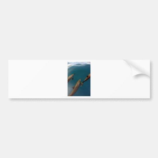 Swimming dolphins Tahiti Bumper Sticker