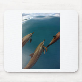 Swimming dolphins Tahiti Mouse Pad
