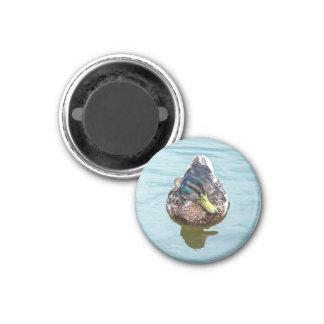 Swimming Duck 1 Inch Round Magnet