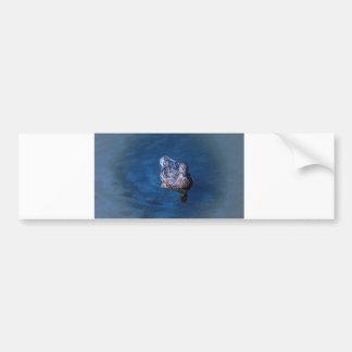 Swimming Duck Bumper Sticker