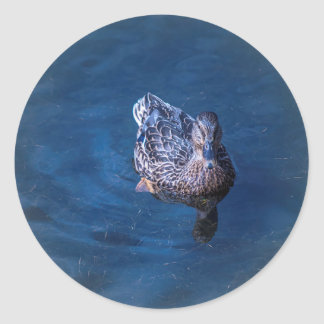 Swimming Duck Classic Round Sticker