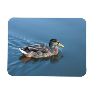 Swimming duck magnet