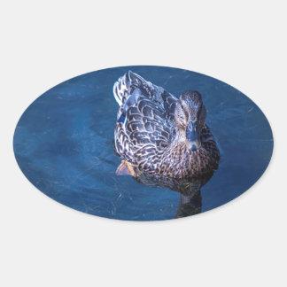 Swimming Duck Oval Sticker