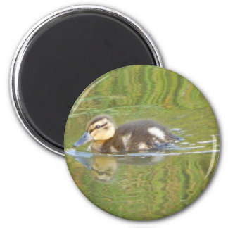 Swimming Duckling 2 Inch Round Magnet