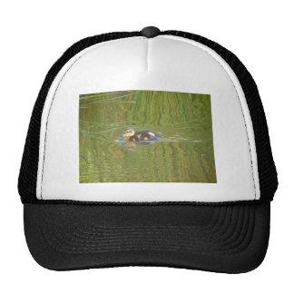 Swimming Duckling Trucker Hat