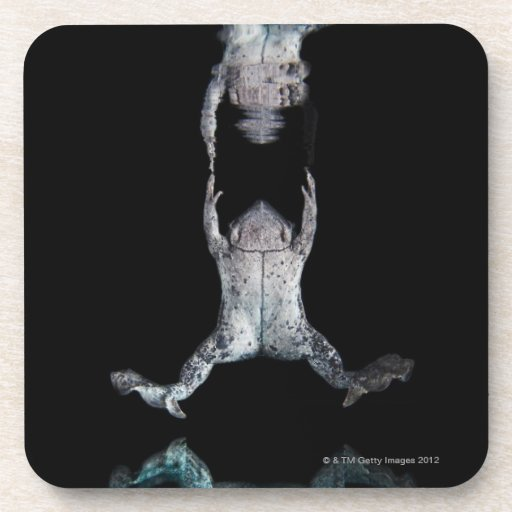 Swimming frog drink coasters
