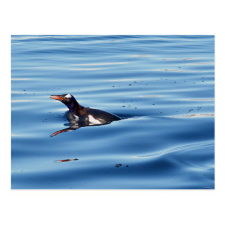 Swimming Gentoo Penguin Postcard