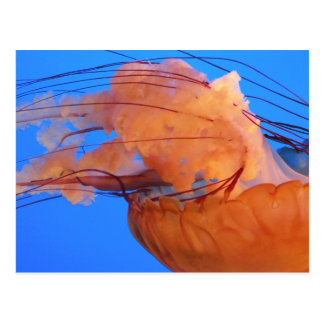 Swimming Jellyfish Postcard