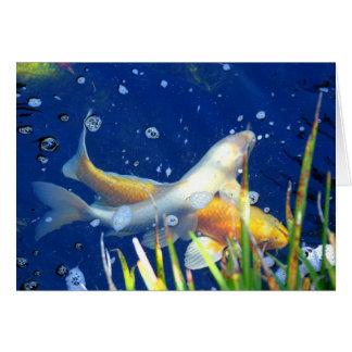 swimming koi carp in a pond card