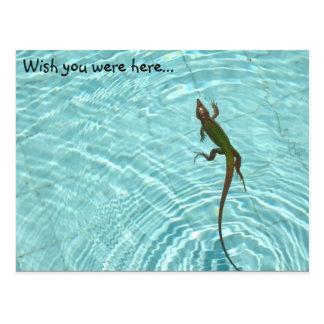 Swimming Lizard postcard