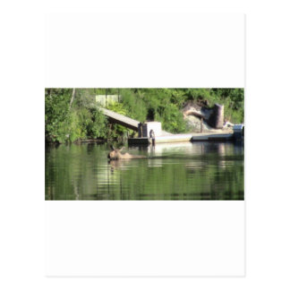 Swimming Moose Post Cards