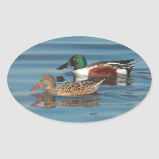 Swimming Northern Shovelers Sticker Oval Sticker