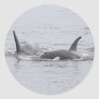Swimming Orcas Classic Round Sticker