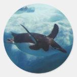 swimming penguin round sticker