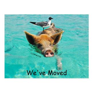 Swimming Pig New Address Postcard