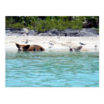 Swimming Pigs in Beach Postcard