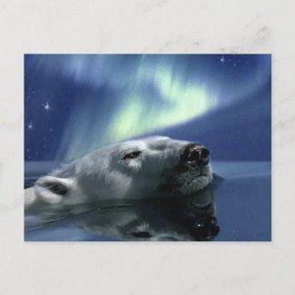 SWIMMING POLAR BEAR Postcard zazzle_postcard