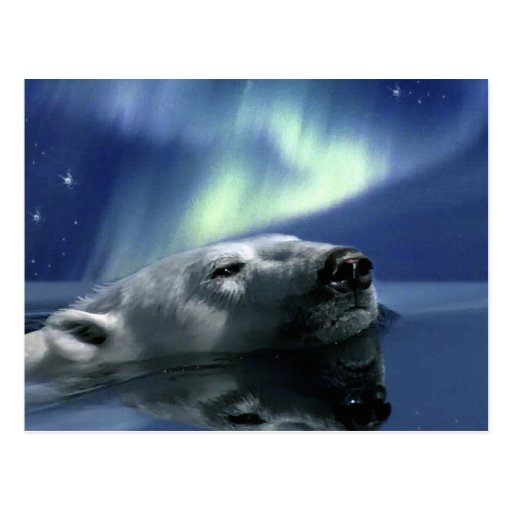 SWIMMING POLAR BEAR Postcard