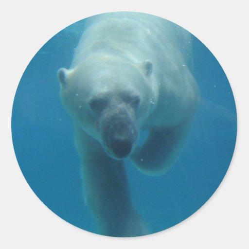 Swimming Polar Bear  Stickers
