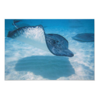 Swimming Pretty Stingray Print