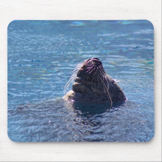 Swimming Sea Lion Mouse Pad