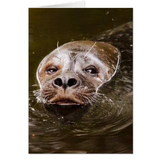 Swimming Seal Card