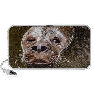 Swimming Seal Notebook Speaker