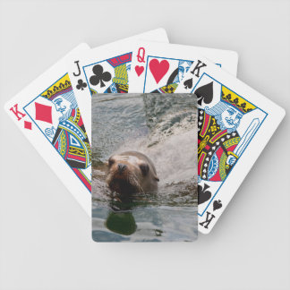 Swimming seal playing cards