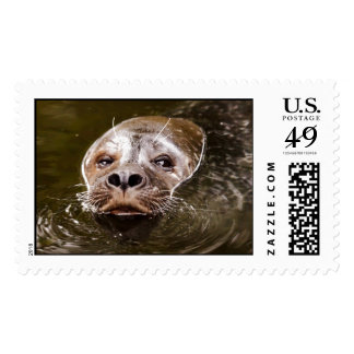 Swimming Seal Postage