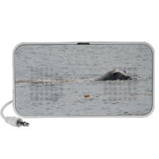 Swimming Seal Mp3 Speakers