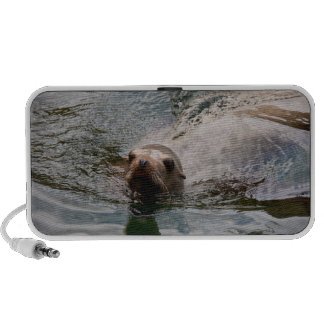 Swimming seal laptop speakers