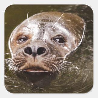 Swimming Seal Square Sticker