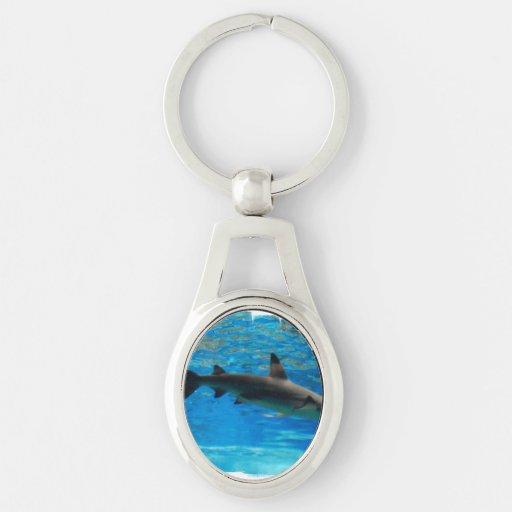 Swimming Shark Key Chains