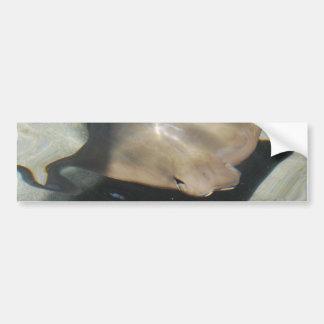 Swimming Stingray Bumper Stickers