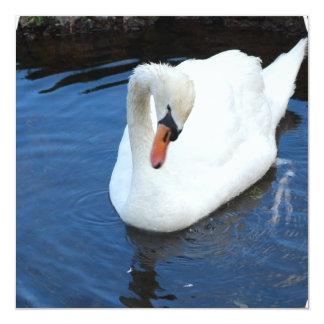 Swimming Swan Invitation