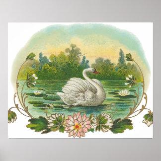 Swimming Swan Posters