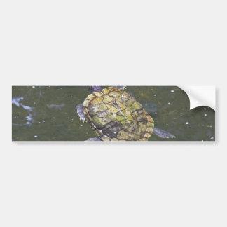 Swimming turtle in Singapore Botanical Garden Bumper Sticker