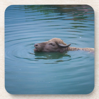 Swimming Water Buffalo Beverage Coaster