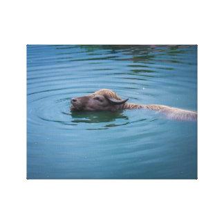 Swimming Water Buffalo Canvas Print