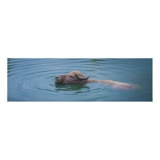 Swimming Water Buffalo Panel Wall Art