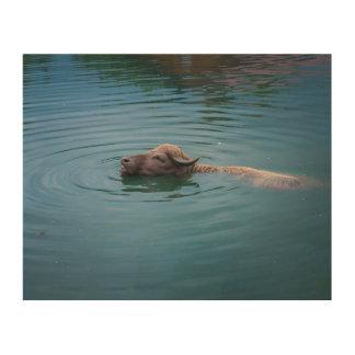 Swimming Water Buffalo Wood Print
