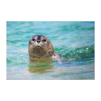 Swimming with a baby seal gallery wrapped canvas