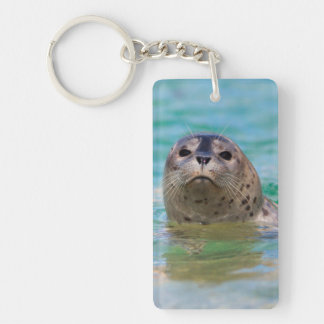 Swimming with a baby seal keychain