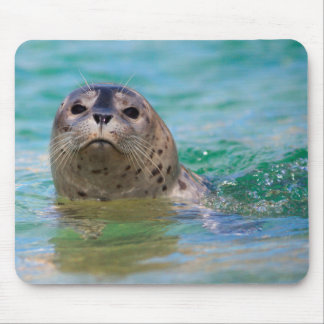 Swimming with a baby seal mouse pad